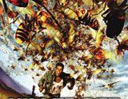 【映画】 6月4日「ムシの日」に世界の虫パニック映画5作品が一挙放送